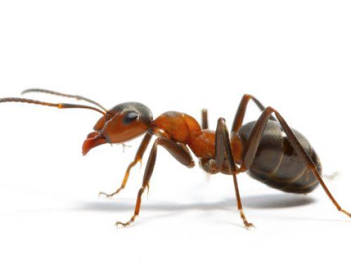 Γιατί τα μυρμήγκια είναι κάτι παραπάνω από μία απλή ενόχληση